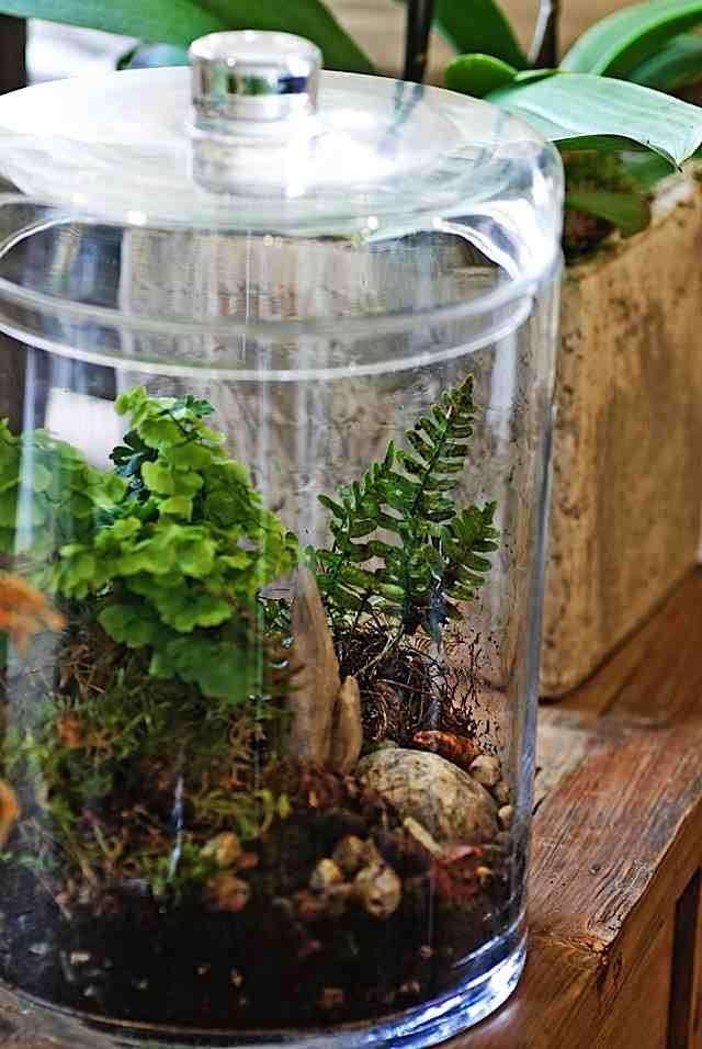rm-centro-garden-terrarium-sm