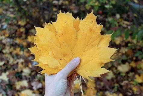 yellow-leaves-design-skool