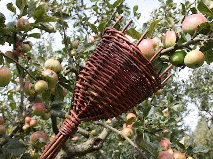 700_700-rhs-willow-fruit-picker