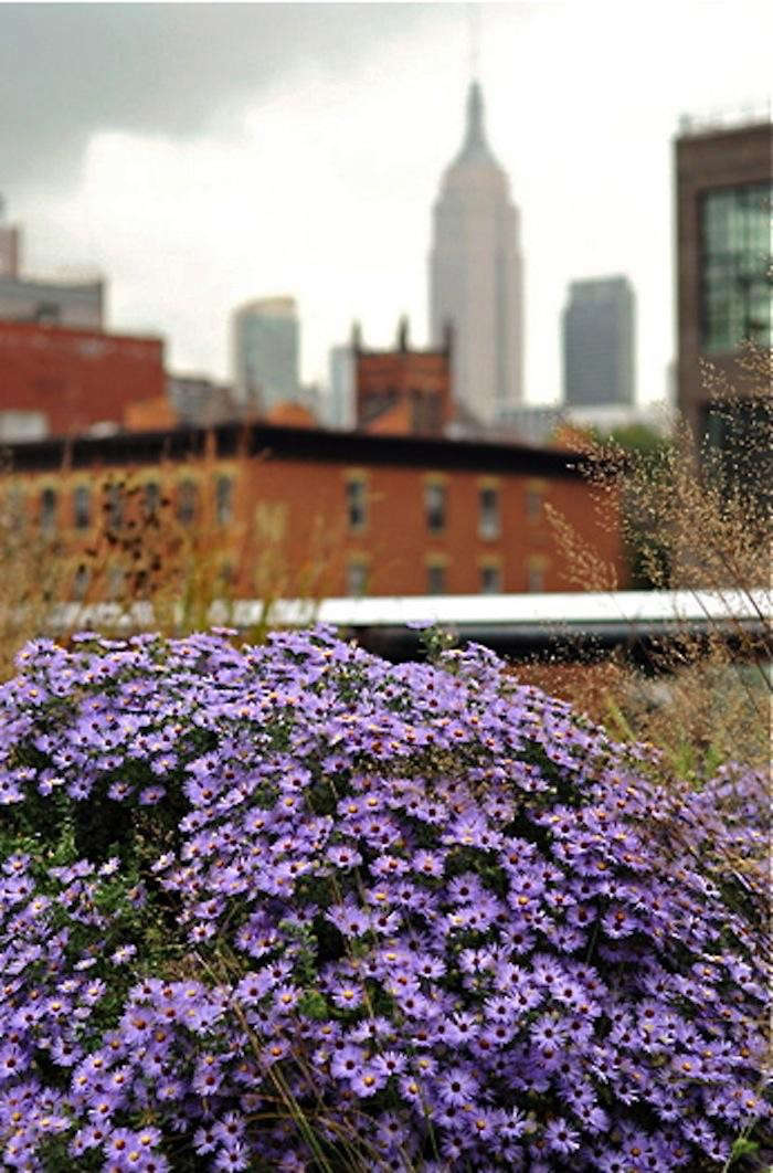 700_asters-on-the-high-line