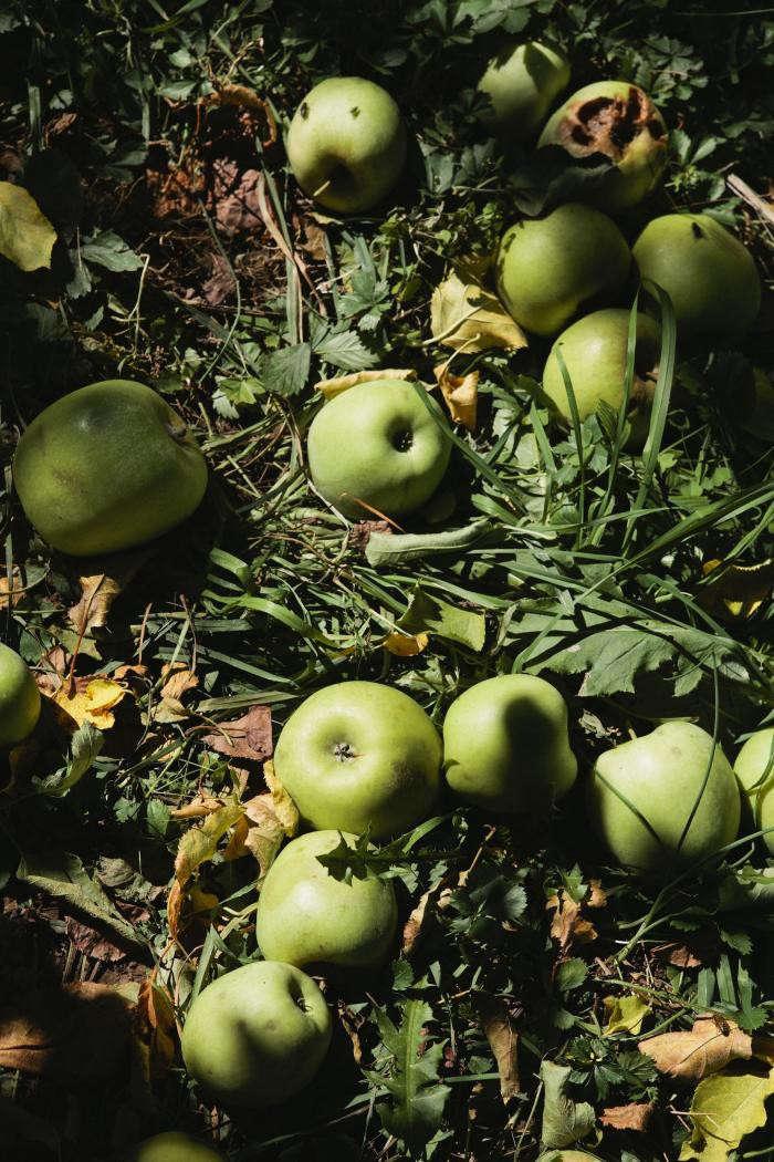 700_nicole-franzen-green-apples