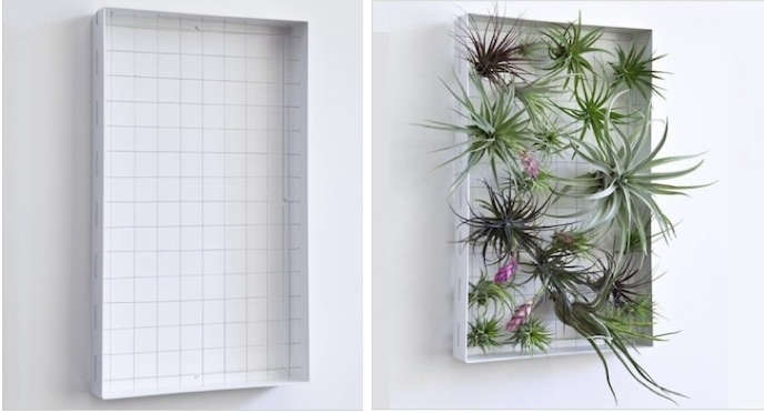 air-plant-frame-montage