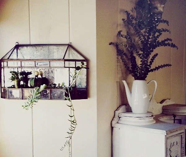 mirror-wall-terrarium