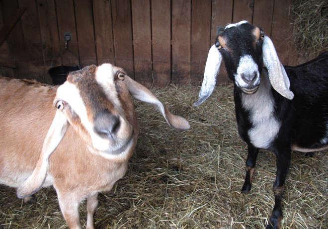 remodelista-hudson-made-goat-milk-soap-03-jpeg