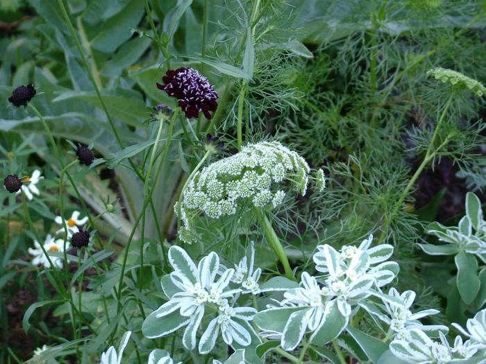700_leva-garden-closeup