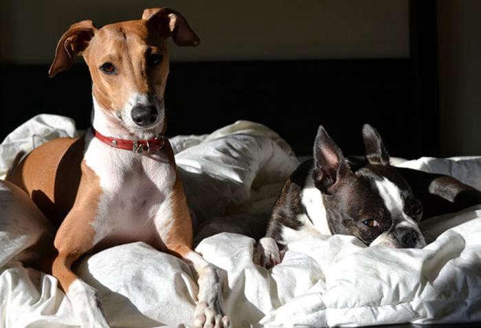 700_tag-collar-dogs