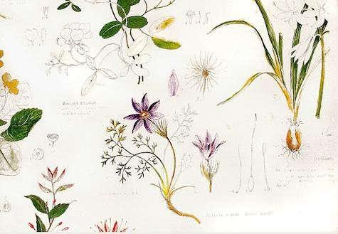 kevin-dean-botanical
