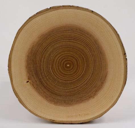 ash-crosscut-board