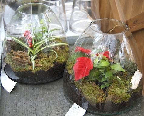 terrain-terrariums-color