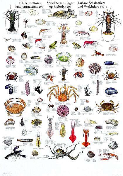 mollusk-poster