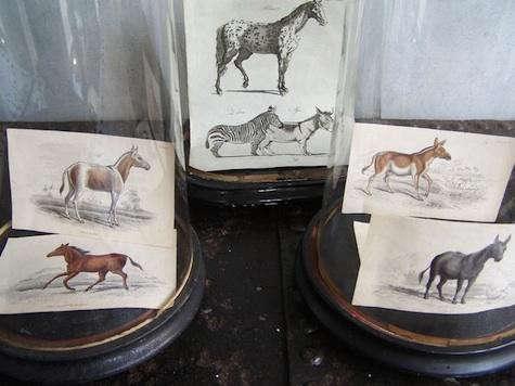 alex-macarthur-horse-postcard