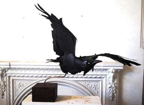 ana-wili-black-raven