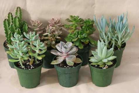 florico-succulents