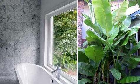 lang-banana-tree-bath