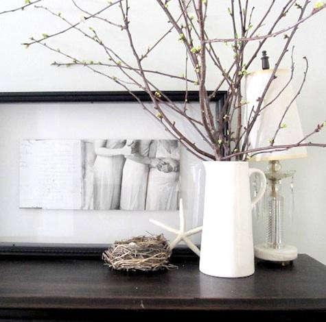 pilo-branches