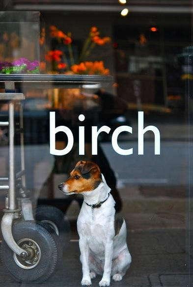 Birch%206