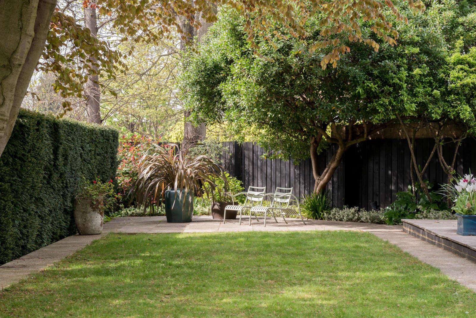 trees london backyard lawn hedges themodernhouse belsize lane