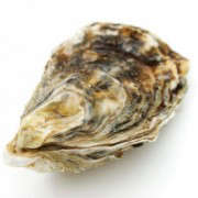 Oyster-Shell-Portrait