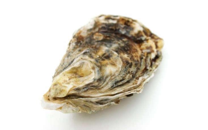Oyster-Shell-Portrait