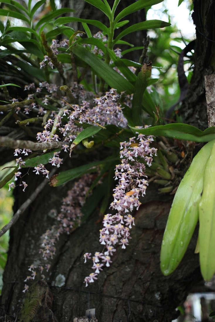Sophia_Moreno_Bunge_Orchids_Gardenista2