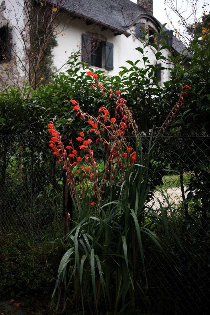 Sophia_moreno_bunge_Orchids_gardenista_3