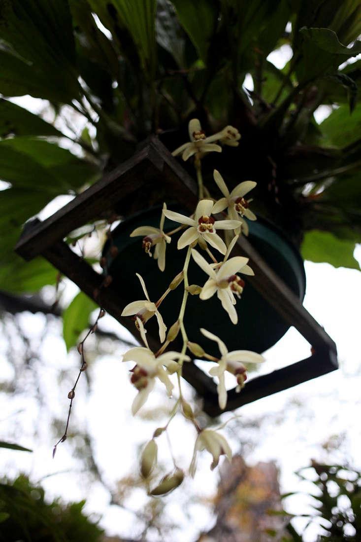 Sophia_moreno_bunge_Orchids_gardenista_7