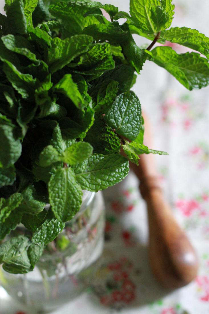 bundle-of-mint-gardenista