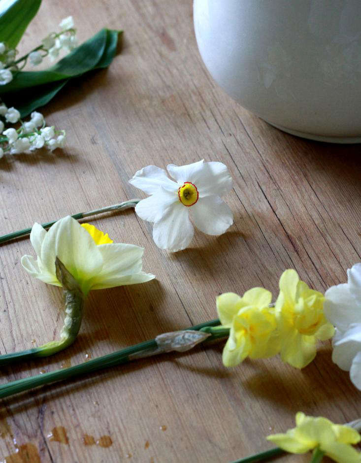 dainty daffodils on table