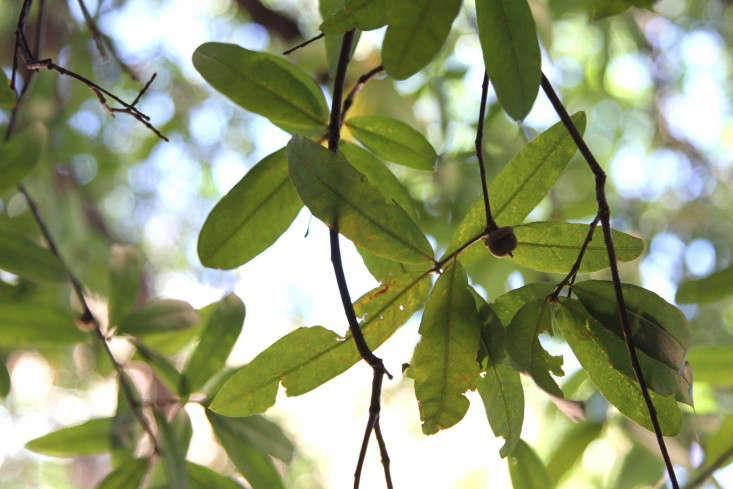 1-city-tree-identification-erinboyle-gardenista