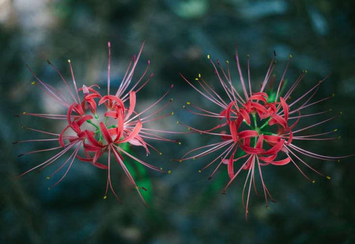 12-cyrpress-gardens-melissa-toms-gardenista