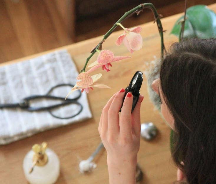 12-orchidcare-erinboyle-gardenista