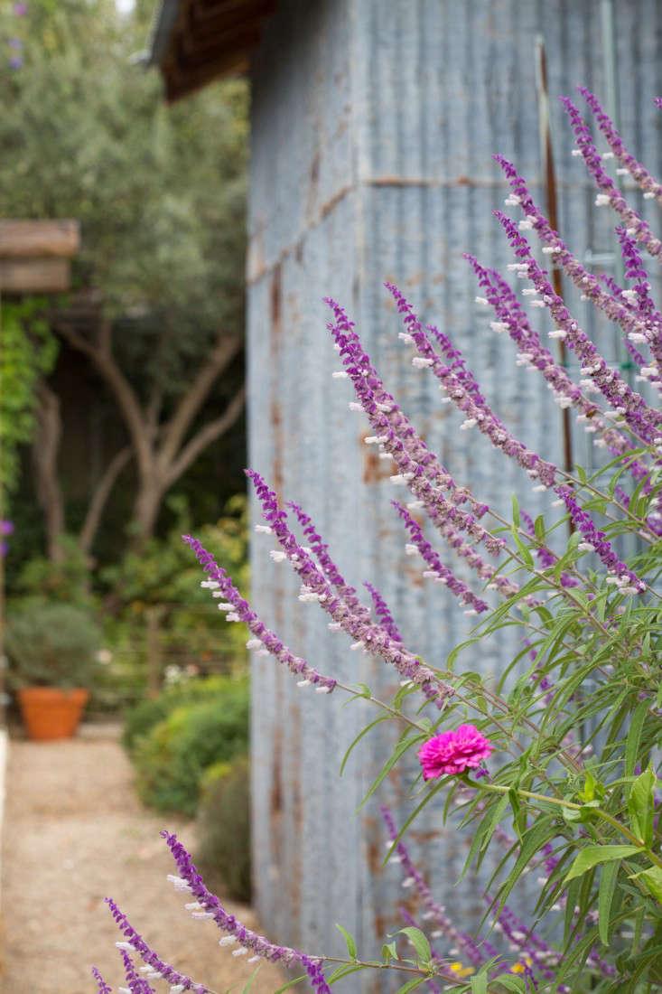 17-Cara-Garden-Mimi-Giboin-Sonoma-Gardenista