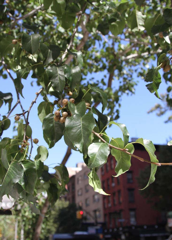 4-city-tree-identification-erinboyle-gardenista