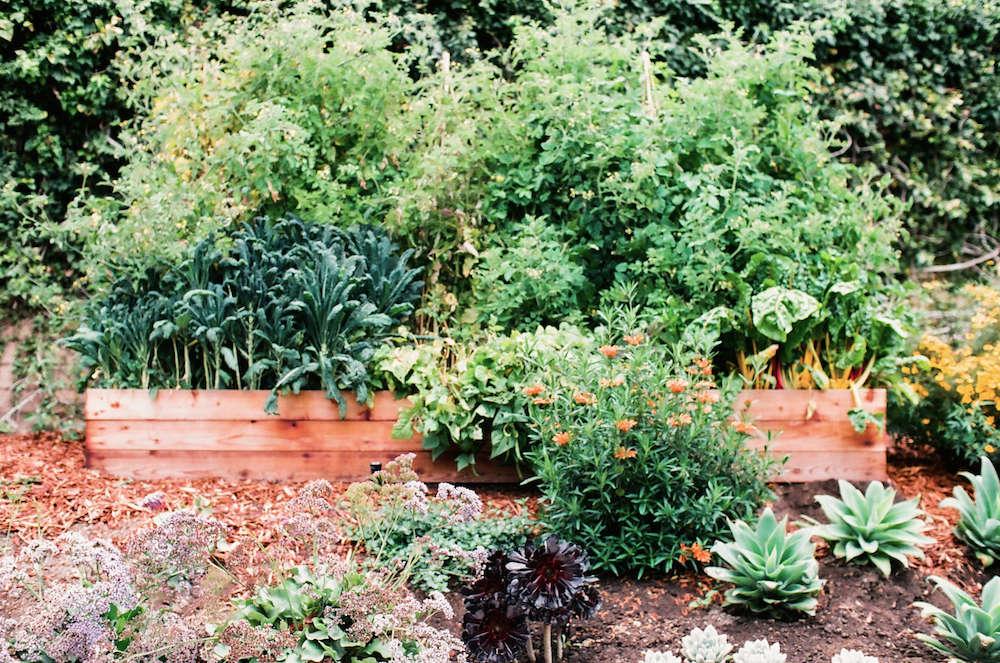 4-malibu-garden-matthew-brown-raised-beds-gardenista