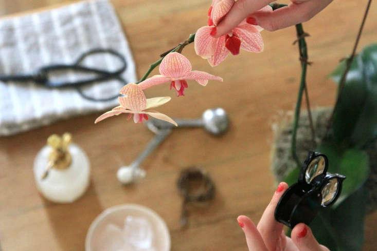 4-orchidcare-erinboyle-gardenista
