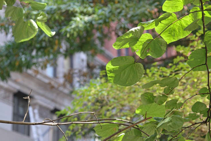 5-city-tree-identification-erinboyle-gardenista