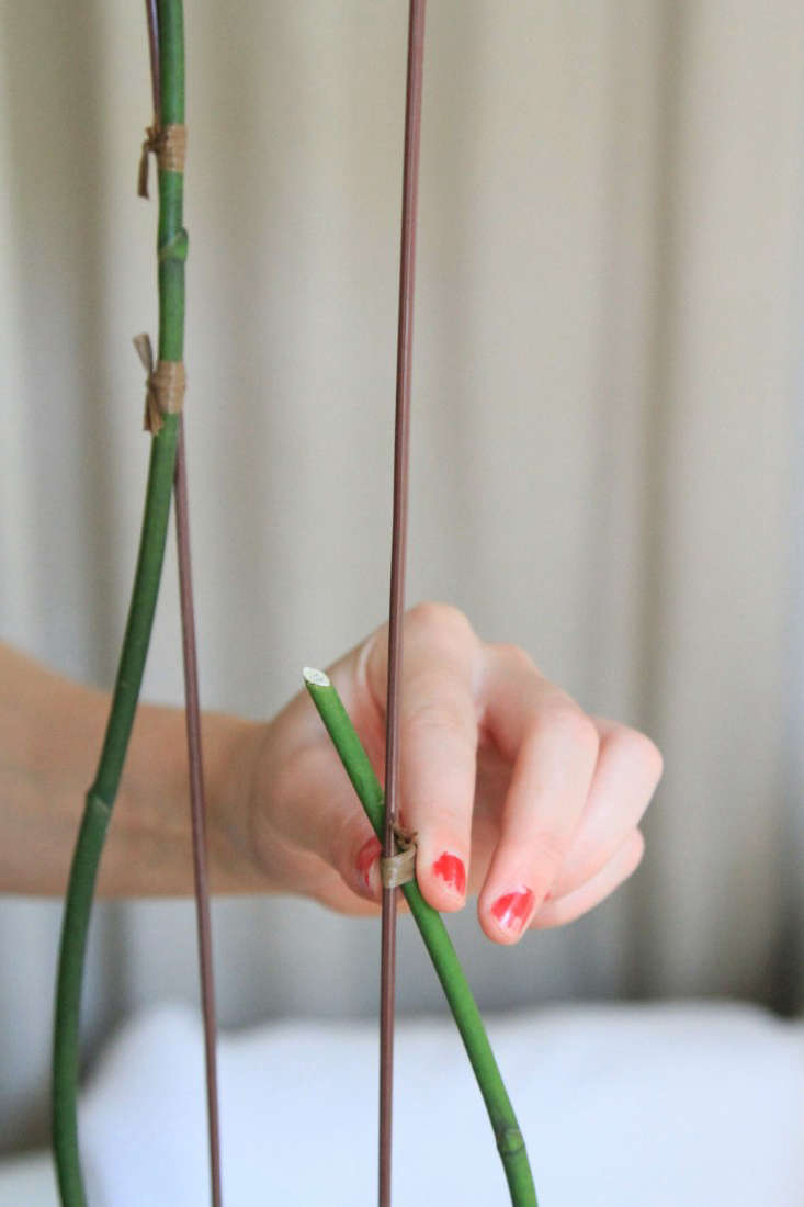 5-orchidcare-erinboyle-gardenista