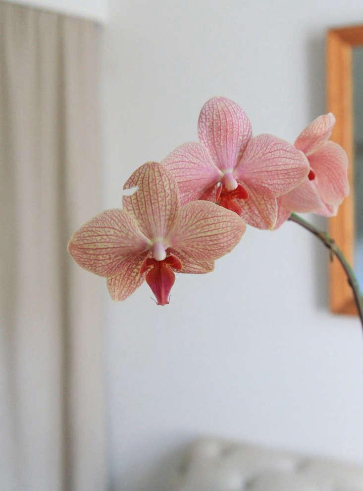 6-orchidcare-erinboyle-gardenista