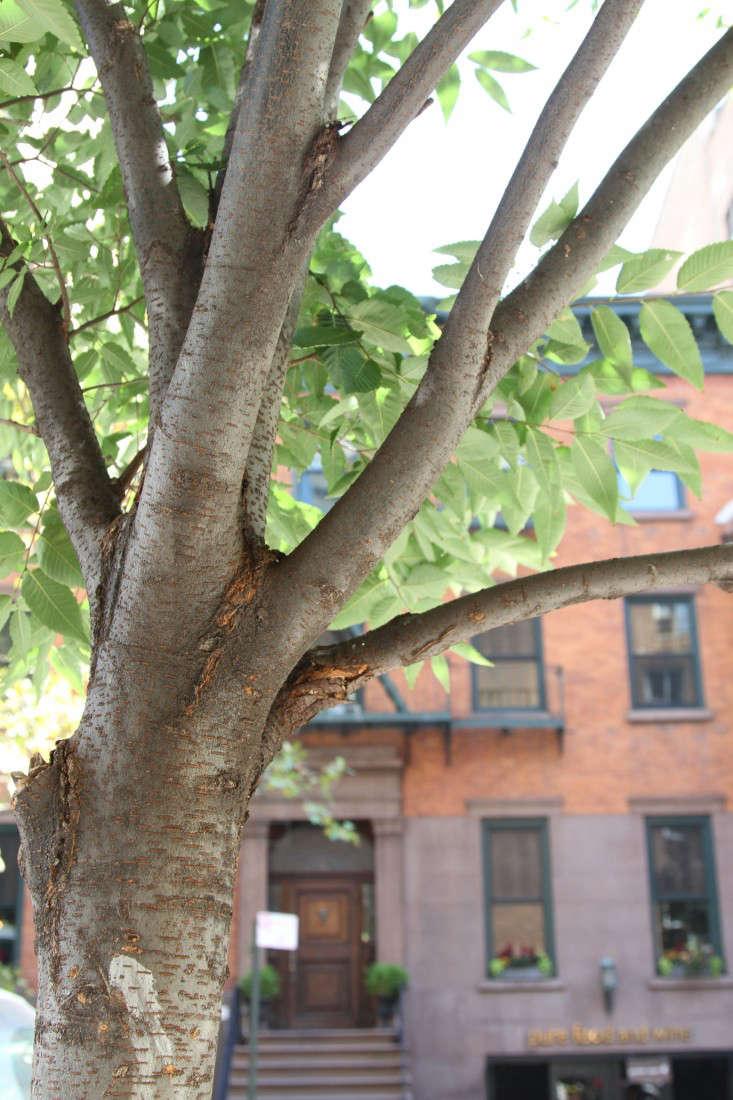 7-city-tree-identification-erinboyle-gardenista