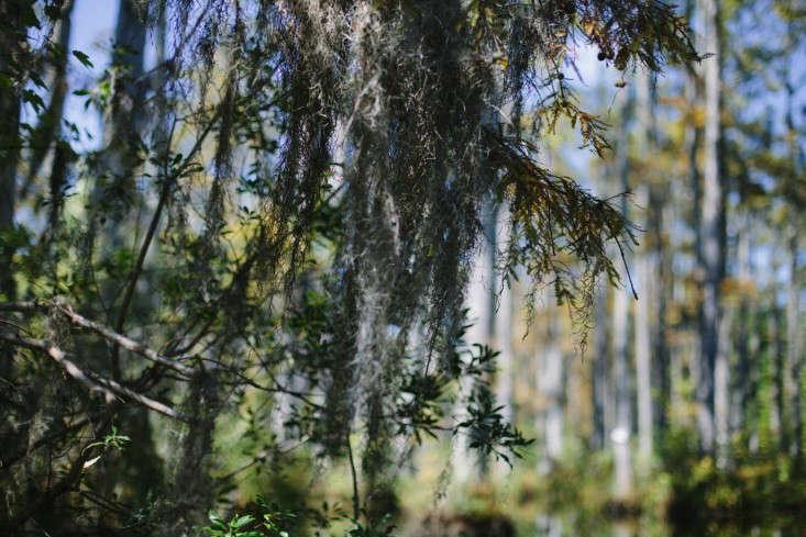 7-cyrpress-gardens-melissa-toms-gardenista