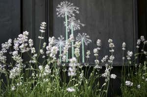 blomsterkuret florist shop lavender via Gardenista