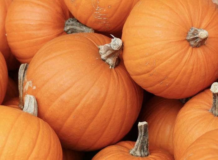 700_classic-charisma-pumpkins