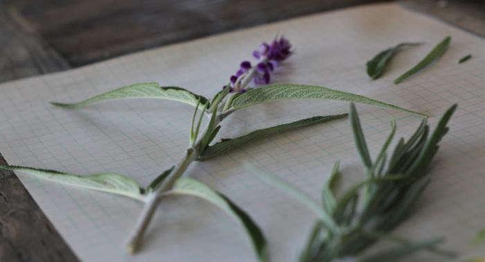 Plantas que atraen a las mariposas: Las mejores plantas de jardín de mariposa | Almanaque del Viejo Agricultor