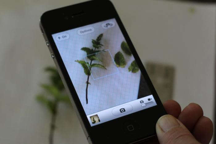 700 iphone 0 - Just what is the optimal totally free of charge herb identification mobile app