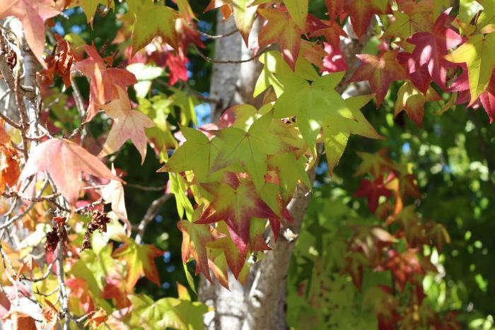 ¿Qué plantas o flores crecen durante todo el año & amp; ¿No morirá? | Inicio Guías | Puerta SF