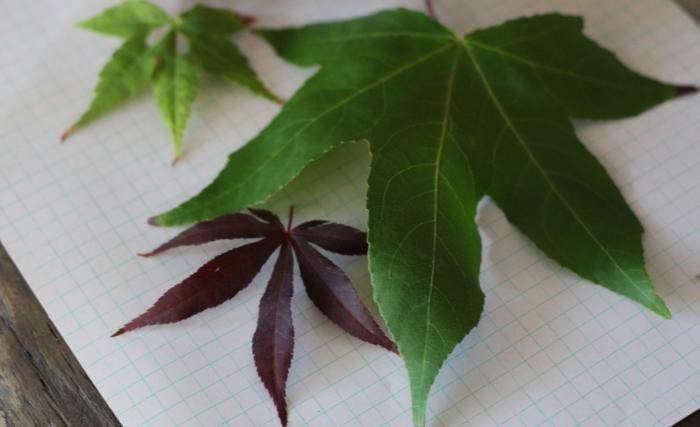 use plant identifier app for plant identification and to id leaves