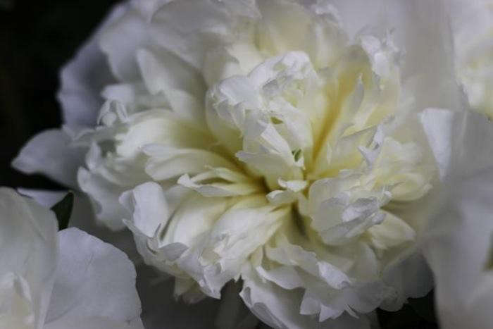 700_peonies-little-flower-school-1-gardenista