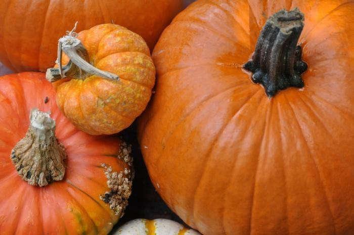 700_pumpkins-group