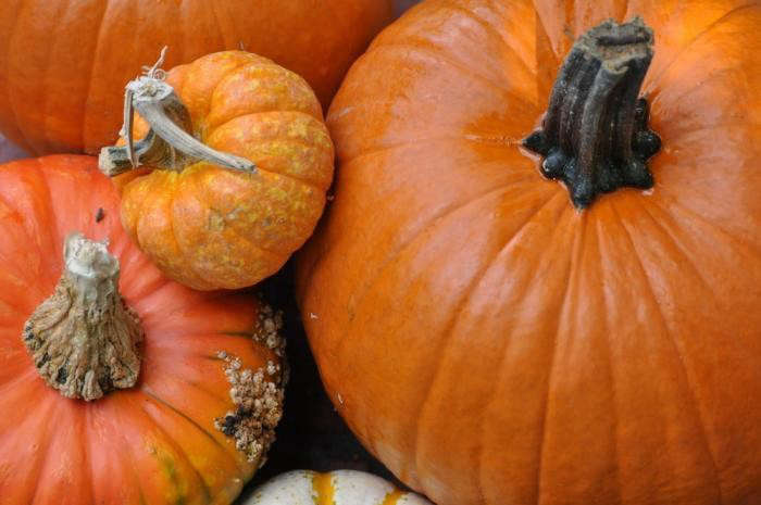 700_pumpkins-group