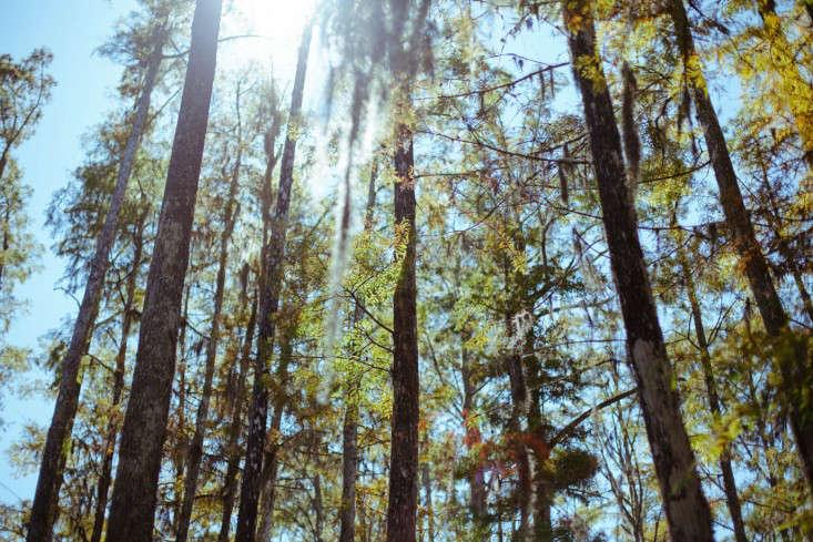 9-cyrpress-gardens-melissa-toms-gardenista